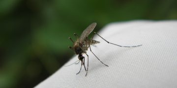 Odkomarzanie - zwalczanie komarów Warszawa